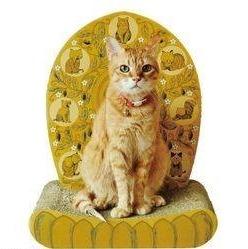 Mag - Temple Cat