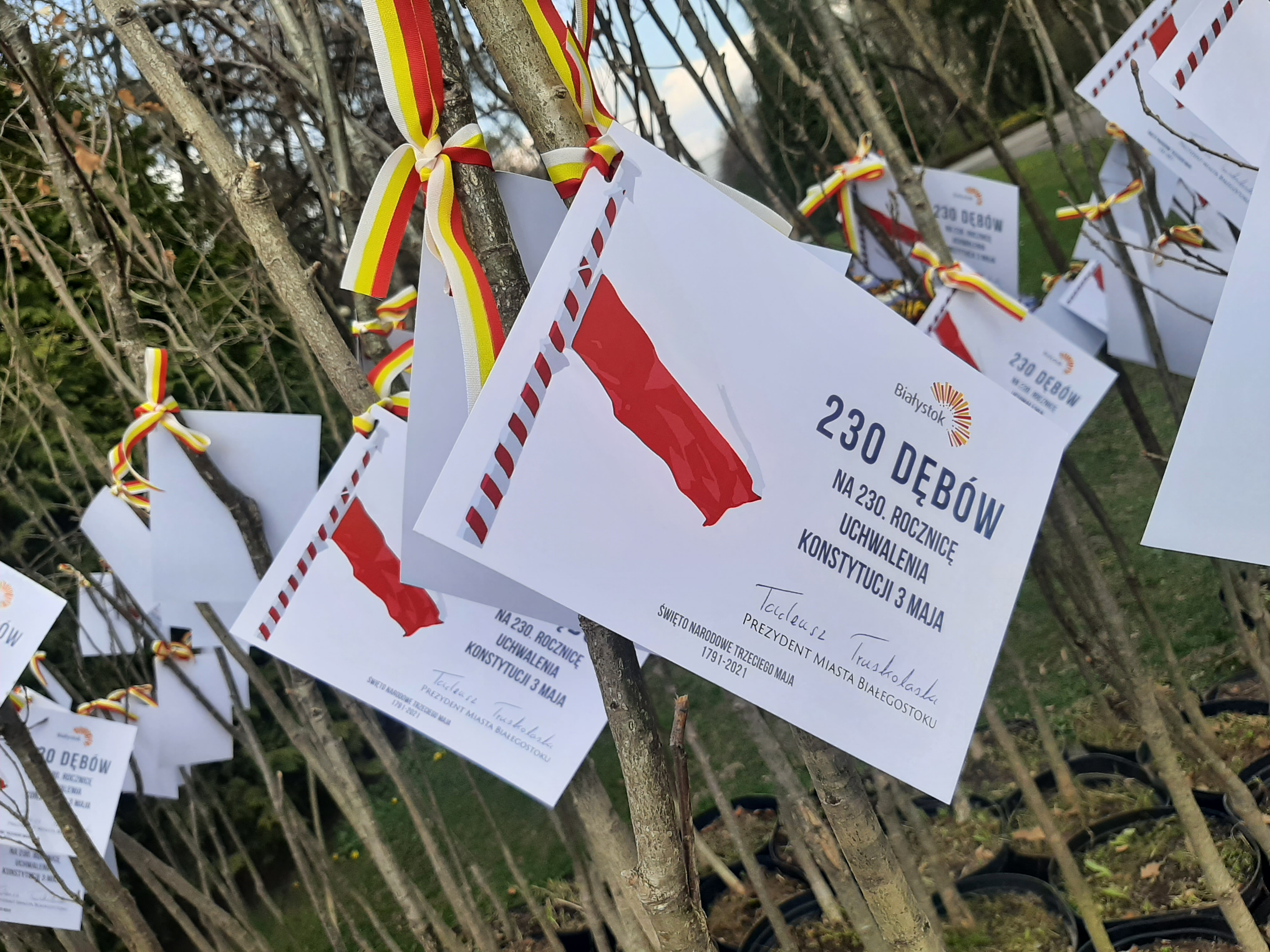 Do sadzonek dębów są przyczepione karteczki z napisem: 230 dębów na 230. rocznicę uchwalenia Konstytucji 3 maja. Pod tym hasłem znajduje się podpis prezydenta Białegostoku Tadeusza Truskolaskiego. Drzewka są przewiązane żółto - czerwonymi wstążkami